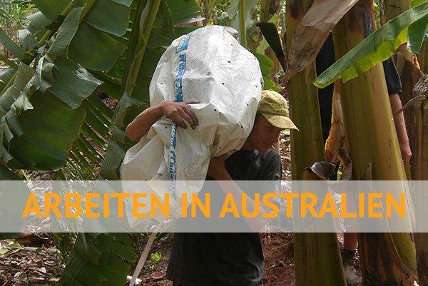 Malte in Australien auf einer Bananenplantage