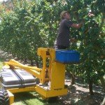 Work & Travel-Jobs in Australien: Fruit Picking