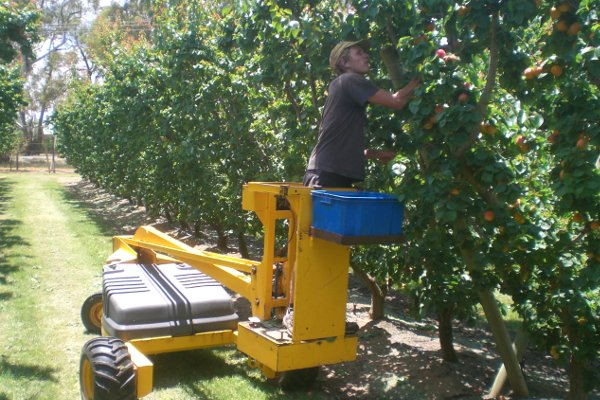 Fruit Picking in Australien