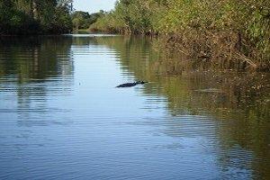 Im Kakadu Nationalpark kannst du viele riesige Korokodile aus sicherer Entfernung bestaunen