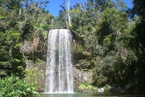 Die Millaa Millaa Falls gehören zu den schönsten und beliebtesten Wasserfällen der Atherton Tablelands