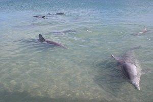 Das Resort in Monkey Mia ist bekannt für seine wildlebenden und zutraulichen Delfine.