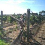 Wwoofing in Australien Gegen Kost & Logis auf ökologisch nachhaltigen Farmen arbeiten